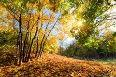 秋天,秋天风景在森林里 免版税库存照片