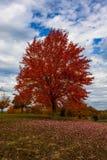 秋天,秋天风景 五颜六色的叶子结构树 红色秋天树 免版税库存图片