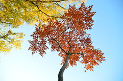 秋天,秋天风景 五颜六色的叶子结构树 库存图片