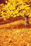 秋天,秋天,留下背景 与秋叶的一个树枝 库存图片