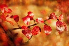 秋天,秋天,留下背景 与秋叶的一个树枝 图库摄影