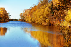 秋天,秋天,留下背景 与秋叶的一个树枝 库存照片