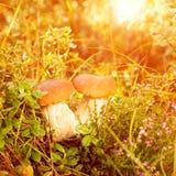 秋天,秋天,留下背景 蘑菇和莓果在fo 免版税库存图片