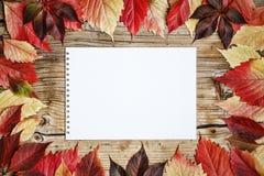 秋天,背景,拷贝空间,木,框架,绿色,五颜六色, 库存图片