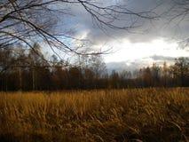秋天,金黄领域,暮色,很远森林,美丽的云彩 库存图片