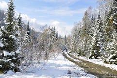秋天, 30 09 2017年 是清楚天空,但是在森林通过了第一雪 免版税库存照片