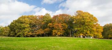 秋天:与秋天颜色的树 免版税图库摄影