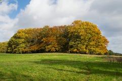 秋天:与秋天颜色的树 免版税库存照片