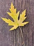 秋天:黄色叶子 免版税库存照片