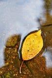秋天 一片美丽的五颜六色的叶子在The Creek 自然季节性色的背景 库存图片