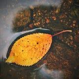 秋天 一片美丽的五颜六色的叶子在The Creek 自然季节性色的背景 免版税库存照片
