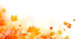 秋天 与五颜六色的叶子和太阳的秋天抽象背景飘动 免版税库存照片