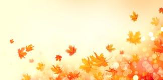 秋天 与五颜六色的叶子和太阳的秋天抽象背景飘动 库存照片