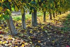 秋天 划分为的黄色叶子 库存图片