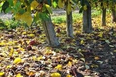 秋天 划分为的黄色叶子 库存照片