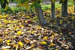 秋天 划分为的黄色叶子 免版税库存照片