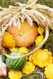 秋天 南瓜 万圣节 仍然1寿命 西瓜 橙色 免版税库存照片
