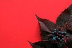 秋天 叶子用在红色背景的莓果 免版税库存图片