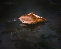 秋天-叶子 免版税图库摄影