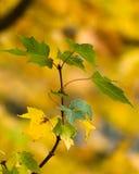 秋天-叶子 免版税库存照片