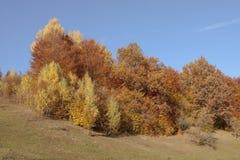 秋天 喀尔巴汗,乌克兰,欧洲 库存照片