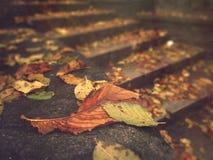 秋天 在楼梯的下落的叶子 免版税库存照片