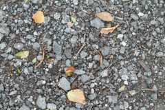 秋天 在灰色背景的黄色和绿色叶子 库存图片