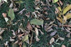 秋天 在绿色背景的黄色和绿色叶子 免版税图库摄影