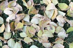 秋天 在绿色背景的黄色和绿色叶子 免版税库存图片