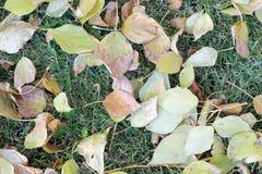 秋天 在绿色背景的黄色和绿色叶子 免版税库存照片