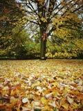 秋天 在葡萄酒生动的颜色的艺术性的神色 库存图片