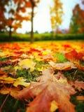 秋天 在葡萄酒生动的颜色的艺术性的神色 库存照片