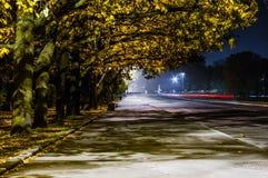 秋天 在路的槭树冠 Kronstadt 库存照片