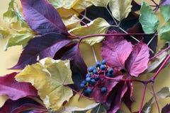 秋天 在黄色背景的叶子 图库摄影