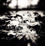 秋天 在黑白的艺术性的神色 免版税图库摄影