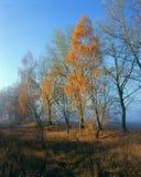 秋天-在trees_的为时叶子 免版税库存图片
