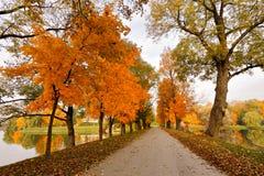 秋天10月五颜六色的公园 叶子树胡同 免版税库存图片