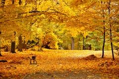 秋天10月五颜六色的公园 叶子树胡同 库存图片