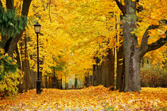 秋天10月五颜六色的公园 叶子树胡同 免版税库存照片