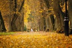 秋天10月五颜六色的公园 叶子树胡同 库存照片