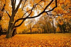 秋天10月五颜六色的公园 叶子树胡同 免版税图库摄影