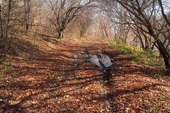 秋天10月 宽秋天森林公路 图库摄影
