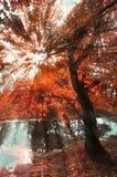 秋天晴朗的风景 库存照片