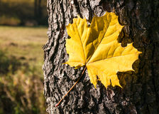 秋天结构在森林里 免版税库存照片