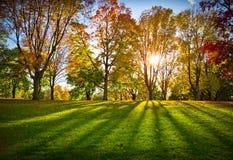 秋天结构树在公园 库存照片