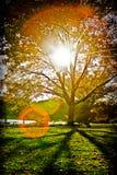 秋天结构树在公园 免版税库存照片