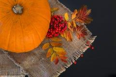秋天结构的南瓜、叶子和莓果 免版税库存照片