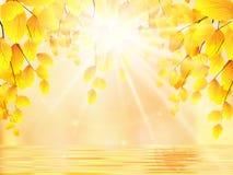 秋天 树枝、金黄叶子和水 库存照片