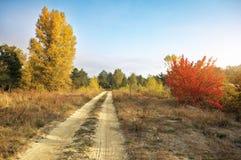 秋天 森林在秋天 免版税库存图片