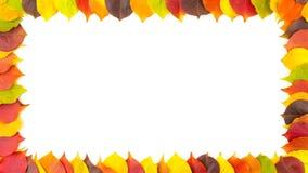 秋天 毗邻在白色隔绝的五颜六色的秋季叶子框架  4K动画 影视素材